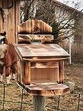 Eichhörnchen Futterhaus Futterstation Witterungsbeständig geflammt FutterautomatMade in...