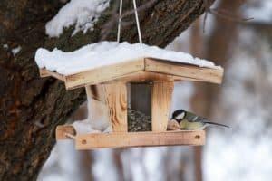 vogel futterhaus für kinder vogelhäuser für Kinder