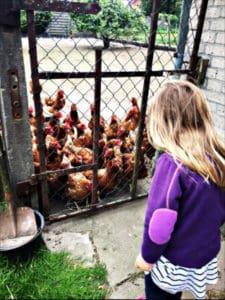 Mitten in Hühnern auf dem Bauernhof beim Camping Landvergnügen